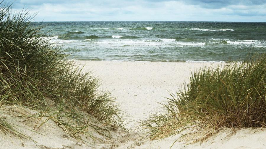 Baltic Dunes -