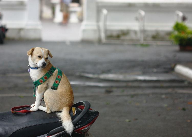 Dog sitting on motorcycle