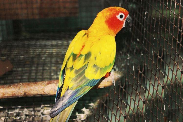 Parrot Bird One