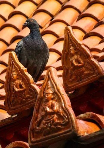 Eye4photography  Birds Animals Thailand_allshots