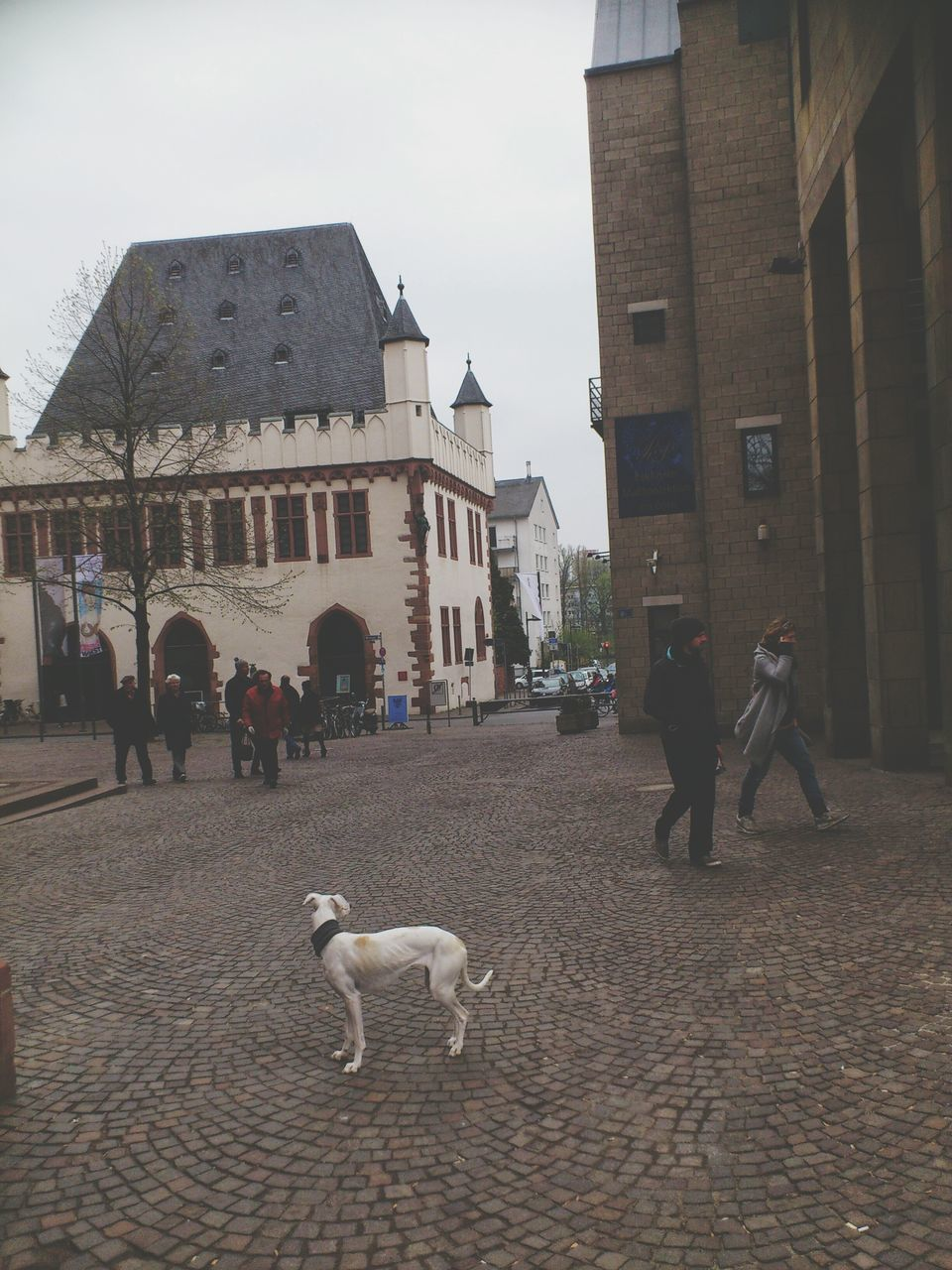 walking, dog, architecture, building exterior, built structure, pets, domestic animals, mammal, street, one animal, real people, men, outdoors, full length, women, dog lead, standing, day, group of people, city, sky, friendship, people