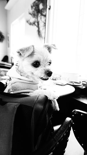 Dog Dog Photography Dog Love Traveling With My Dog Pet Pet Photography  Traveling With Pets Bnw Monochrome