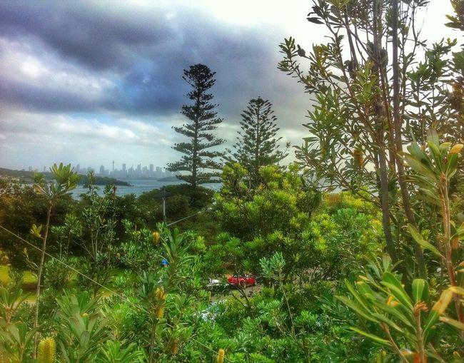 Relaxing Enjoying Life Landscape Landscape_Collection