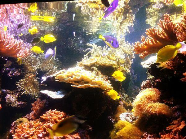 Fish at the Baltimore National Aquarium Fish Aquarium Life Ocean Colorful Sea Life Eyeem Fish