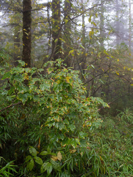 Green leaves of a plant in forest turing yellow in rain. Autumn Rain Beauty In Nature Change Foggy Forest Freshness Green Color Growth Leaf Nature Plant Scenics Season  Tranquility Tree Yellow