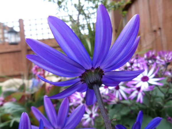 Flowers Floralperfection Purple Flower Beautiful Nature Photography Flowers From My Garden