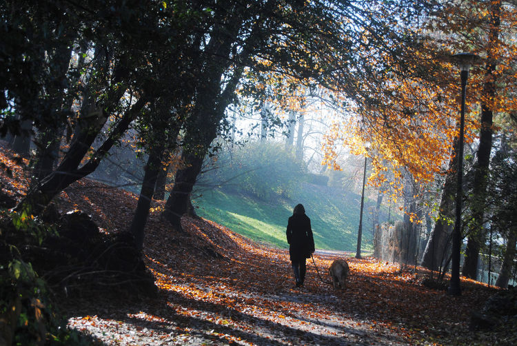 Rear view of woman with dog walking in forest during autumn