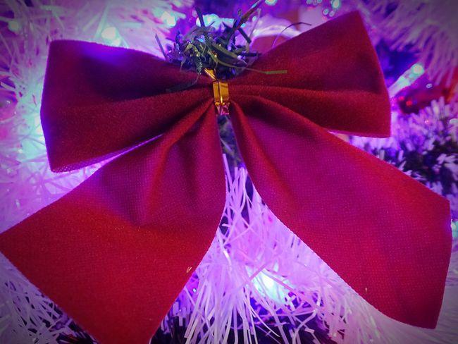 Photography Christmas Decoration Christmas Close-up Celebration Ribbon Bow Indoors  Tinsel  Christmas Tree Red Bow