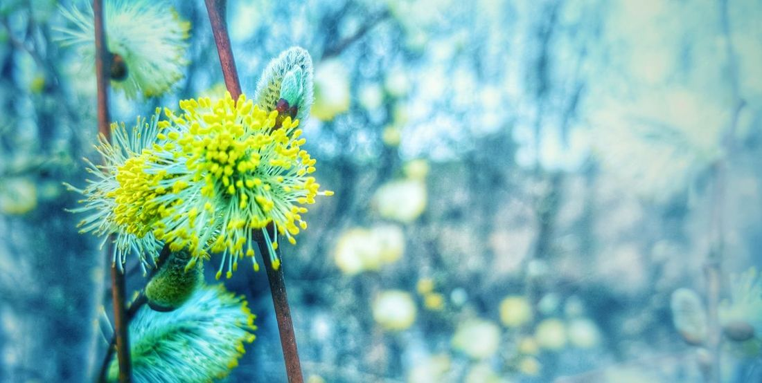 Focus On Foreground Flower Nature Beauty In Nature Close-up Yellow Growth Fragility Plant No People Outdoors Day Flower Head Freshness Mobile Photography From My Point Of View Beauty In Nature Growth Me, My Camera And I