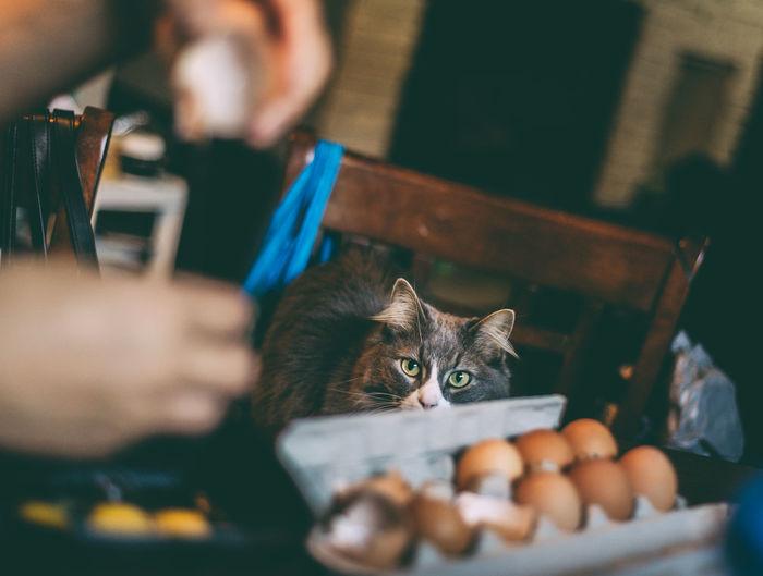 Person preparing cats breakfast of organic egg yolk