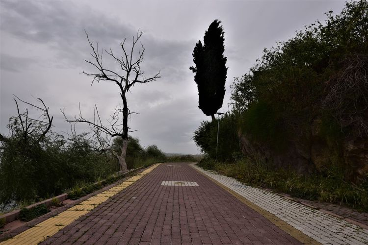 Tree Plant The Way Forward Direction Sky Nature Transportation Diminishing Perspective Growth No People Road Day vanishing point Beauty In Nature Rail Transportation Outdoors Railroad Track Cloud - Sky Land Tranquility Track Long