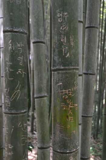 Message Bamboo