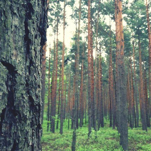 Wald Forrest Alone In Da Forrest