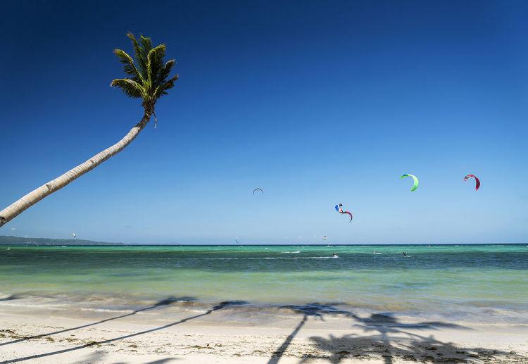 Palm tree at beach against clear blue sky