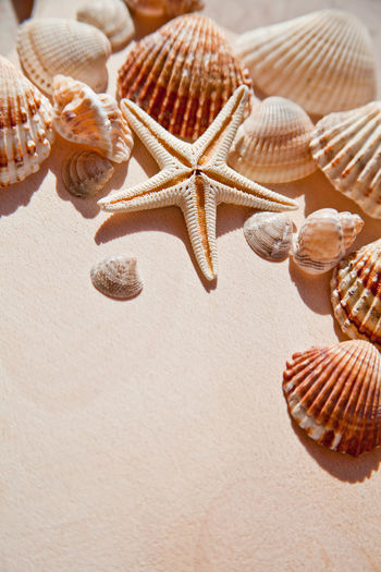 sea shells and