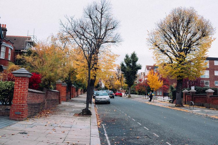 Autumn Trees Sky London Yellow Dusk Park Streetphotography