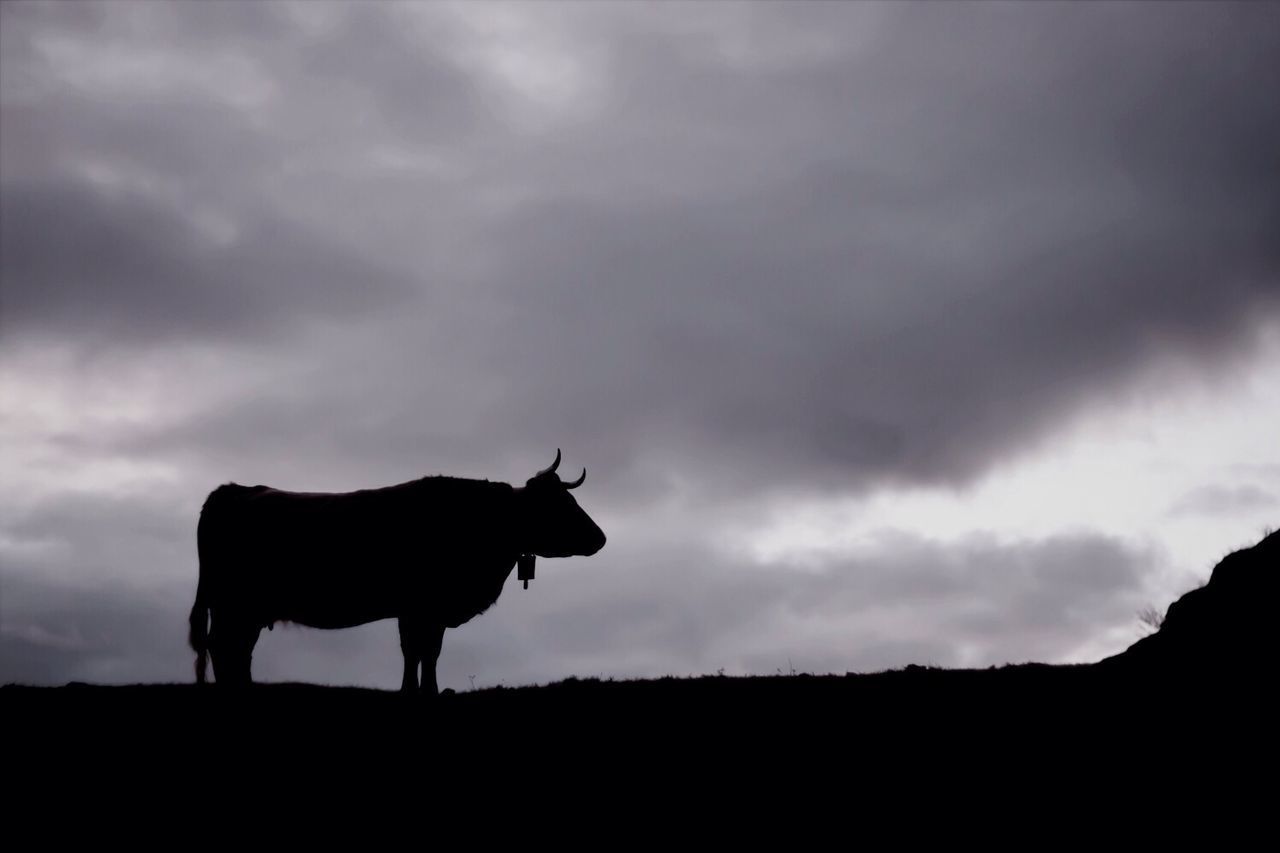 Silhouette Cow Standing On Field Against Cloudy Sky