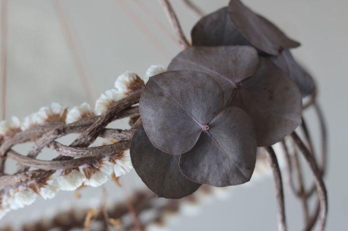 EyeEm Selects No People Indoors  Nature Dried Flowers Flower Industar61 Oldrens Vintagelens