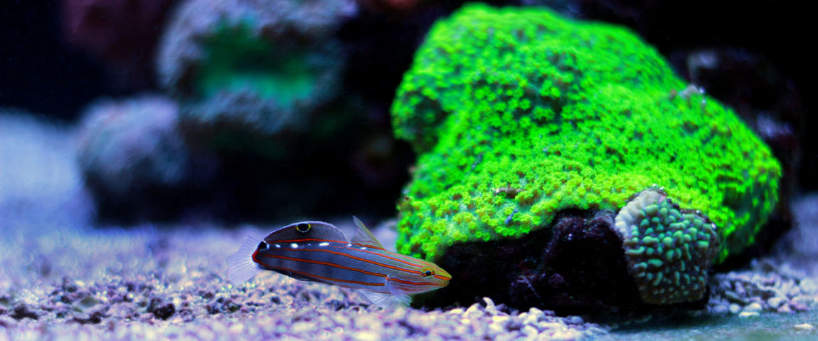 Animal Markings Animal Themes Animal Wildlife Animals In The Wild Beauty In Nature Butterfly - Insect Close-up Day Green Color Insect Nature No People One Animal Outdoors Sea Life Swimming UnderSea Underwater Wildlife Goby Goby Fish Fish Undersea Life Aquarium Photography Photography