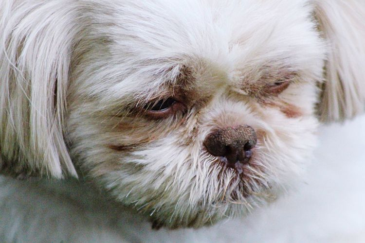 💤 sleepyhead