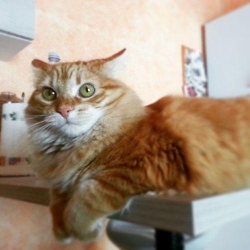 Happy cat day!! Picoftheday Petstagram Catday InternationalCatDay Sophie Cat Micia Gatta Instacat Mine Love MyHOUSE Purrfect Neko Coccole