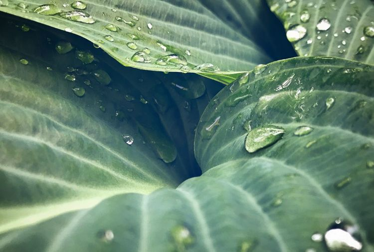 Leaf Plant Part Drop Water Green Color Close-up Wet Growth Freshness Nature Plant