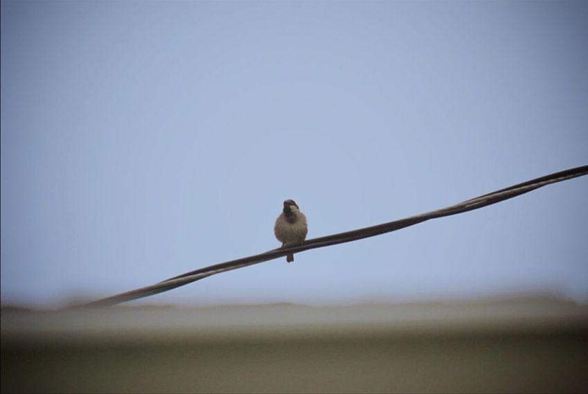 Bird Photography Birds Hannahstewartphotography