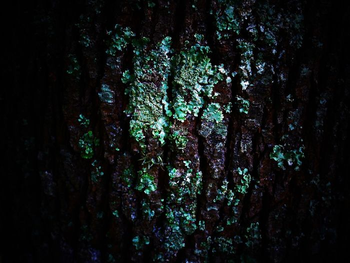 Textured  Tree Trunk Trunk Tree Full Frame No People Backgrounds Close-up Rough Plant Nature Pattern Growth Outdoors Wood - Material Selective Focus Bark Forest Moss Abstract Textured Effect