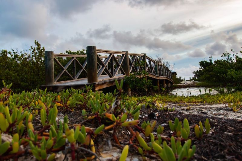View of bridge over plants against sky