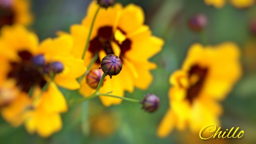 EyeEm Nature Lover Nature Eye4photography  Photography Sony A6000 Beauty Macro Color Flowerporn Flowers