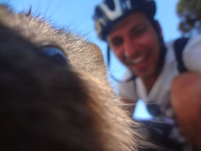 Learn & Shoot: Layering Selfie With An Animal Quokka Marsupial Rottnest Island Australia Enjoying Life Memories Of A Beautiful Adventure