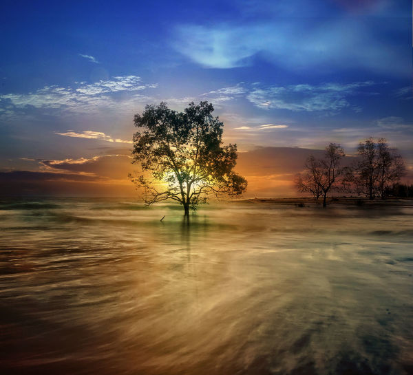 sunset at Tanjung beach Sky Tree Cloud - Sky Beauty In Nature Water Tranquility Sunset Scenics - Nature Tranquil Scene Plant Nature No People Reflection Waterfront Lake Outdoors Non-urban Scene Remote Orange Color Isolated Tree On Beach