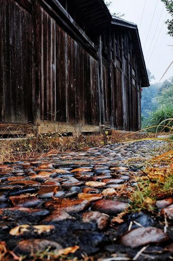 Surface level of fallen leaves in abandoned building