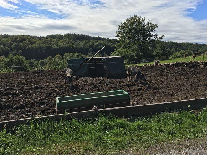 Moderm Farming