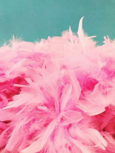 Close-up of pink feathers