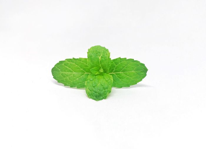 Fresh peppermint green leaf on white background. Studio Herbal Herb Spicy Life Garden Farm Spearmint Mint Pepermint Object Organic Light Cooking Cuisine Ingredient Studio Shot Green Color Leaf White Background Plant Part Nature Plant Food And Drink Still Life Food Wellbeing Freshness Growth Leaves