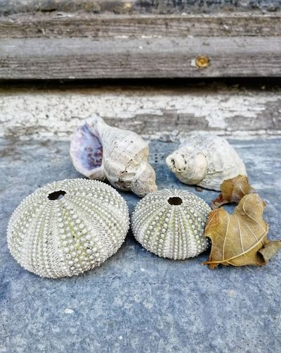 Still life with a shells