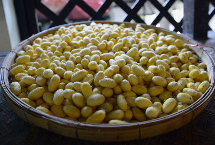 High angle view of cocoons in container