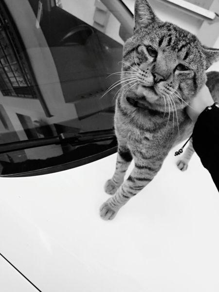 Cuuute Cat Lovers Domestic Animals Cute Cat 😻