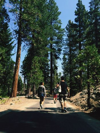 Hike Hike Tree Full Length Real People Leisure Activity Outdoors Wanderlust Explore America Lifestyles Road Rear View Forest Nature Growth Friendship Sky People Young Adult Adult