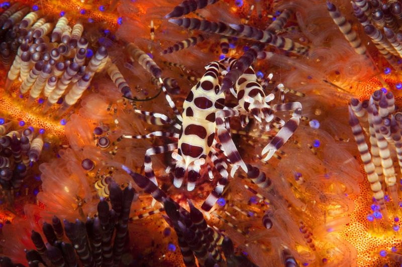 Bright Animal Themes Animal Wildlife Animals In The Wild Close-up Colourful Wildlife Coral Day Fire Urchin Nature No People Outdoors Sea Sea Anemone Sea Life UnderSea Underwater Underwater Photography