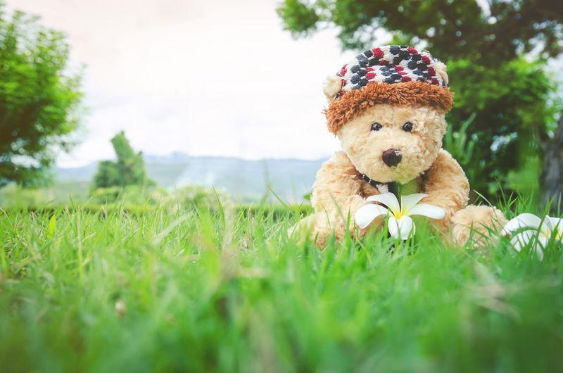 Close-Up Of Teddy Bear On Grass