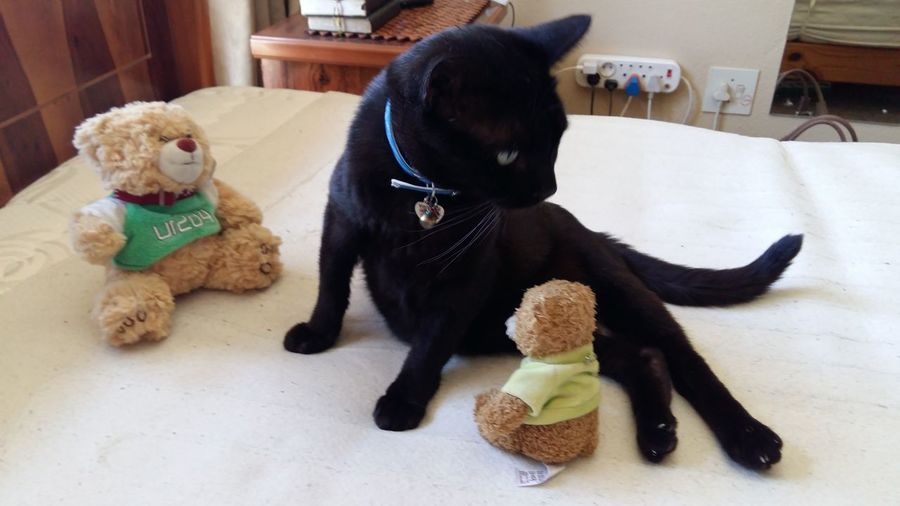 Woah! The Attack Of The Teddies Cat Fright Cheese! Hello World That's Not Me That's My Cat