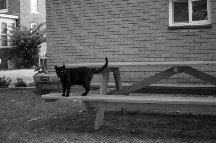 B&W Jasper's picnic table. Mammal Domestic Animals Animal Themes One Animal Building Exterior Built Structure Architecture Pets Day Outdoors Dog Full Length No People Cultivate Ypsi Copy Space Cat