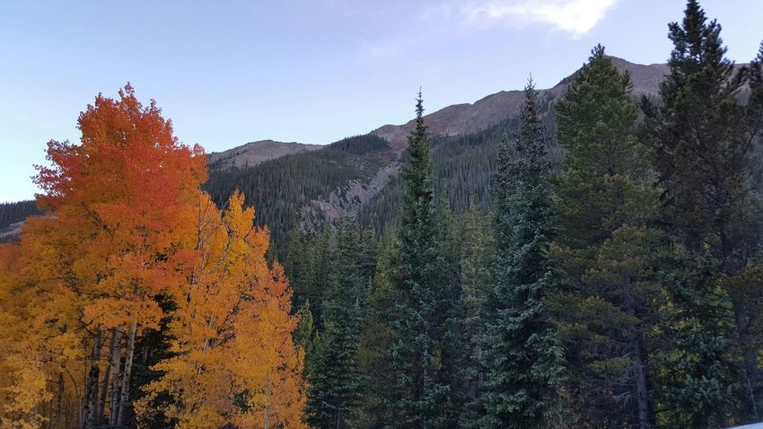 Fall Colors No Filter Mountains Colorado Samsungphotography Samsung Galaxy S6 Edge Check This Out Nature Colorful Trees Fall Leaves Aspens