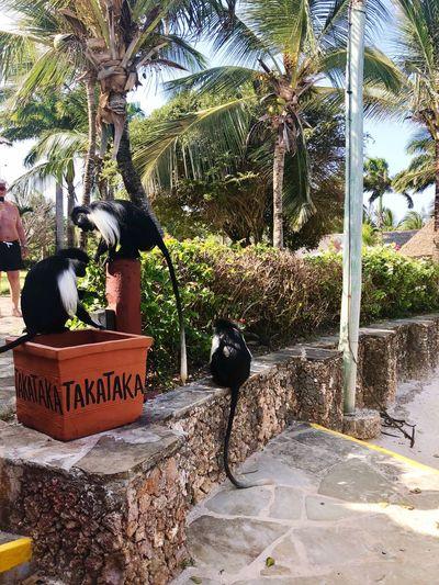 Palm Tree Tree One Animal Animal Themes Day Outdoors Pets