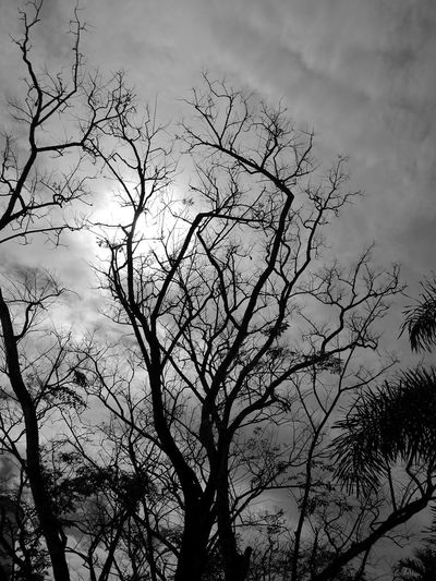 Veins Tree Branch Nature Outdoors Sky Bare Tree