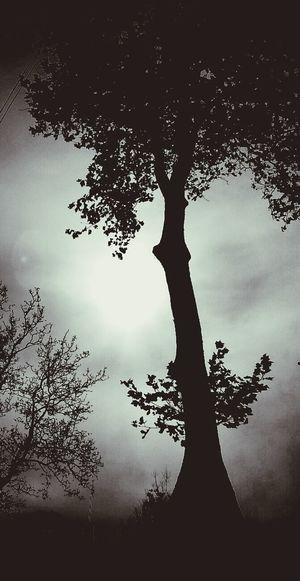 En souvennir de ta magnifique ramure.. deux jours après cette photo, l'arbre a été coupé .