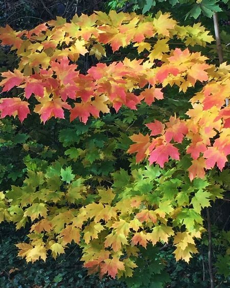 Autumn Leaves Fall Beauty Colorful Leaves