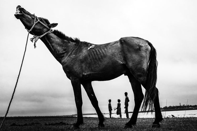 Side view of horse standing on field against sky